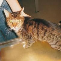 Publikation zum Thema Diätetik bei herzkranken Katzen
