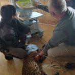 19. September 2019 – Ultraschalluntersuchungen im Safariland Stukenbrock